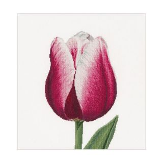 Borduurpakket Rood-witte Tulp Linnen - Thea Gouverneur